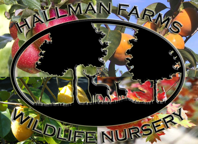 Hall Farms Nurseries Logo